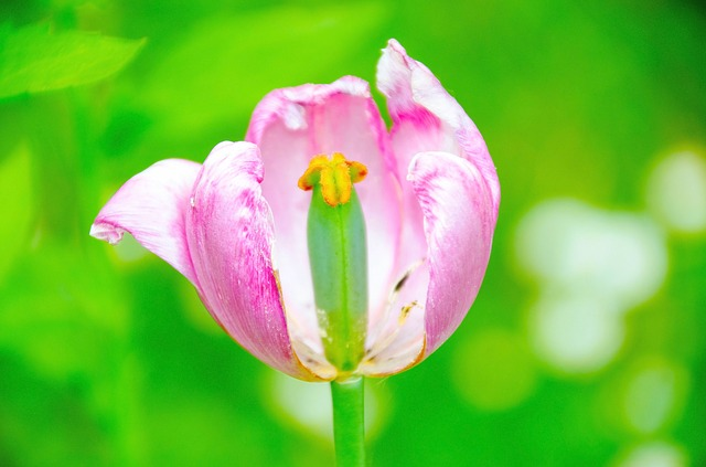 Blossom, Bloom, Pink, Nature, Spring, Bud, Bloom