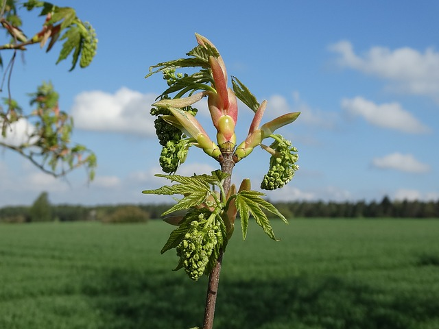 Spring, Sprout, Growth, Bud
