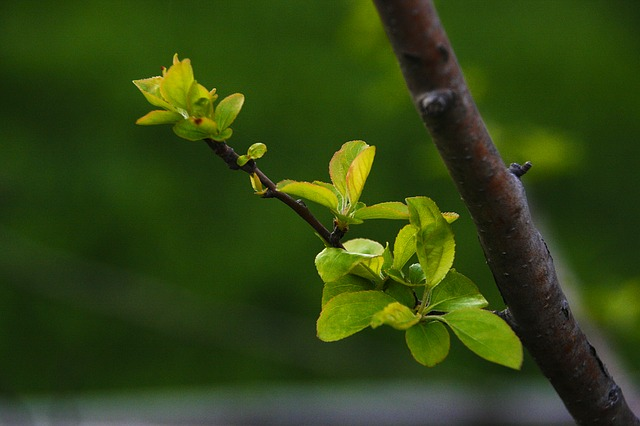 A New Leaf, Flower Apples, Bud, The Leaves, Spring