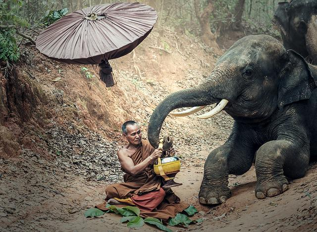 พระ, Elephant, Adult, Animals, Asia, Buddha, Buddhism