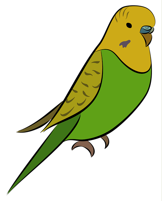 Budgie, Parakeet, Bird, Pet, Yellow, Green, Budgerigar