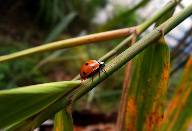 Ladybug, Insect, Animal, Small Animal, Bug, Pistepirkko