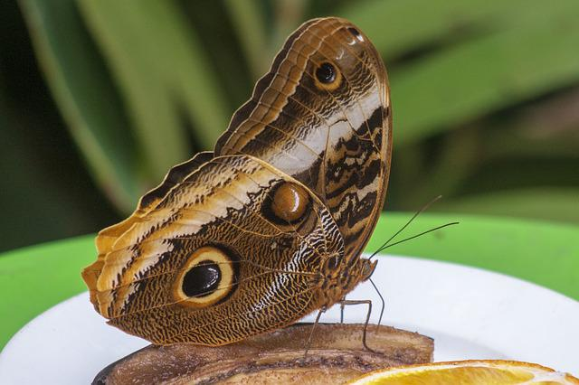 Butterfly, Cocoon, Wildlife, Insect, Butterflies, Bug