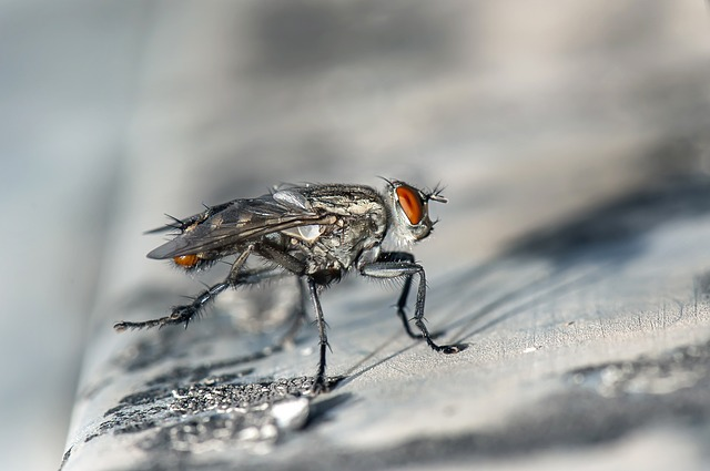 Fly, Macro, Insect, Bug, Close