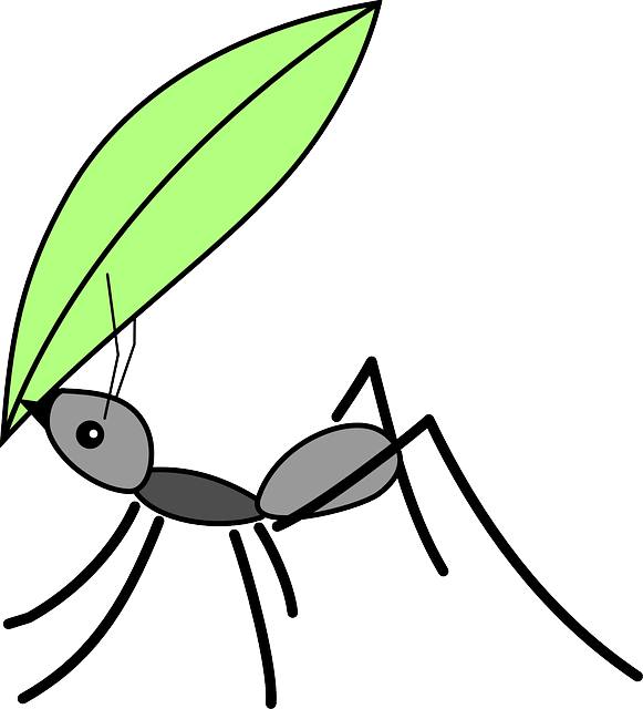 Ant, Insect, Bug, Animal