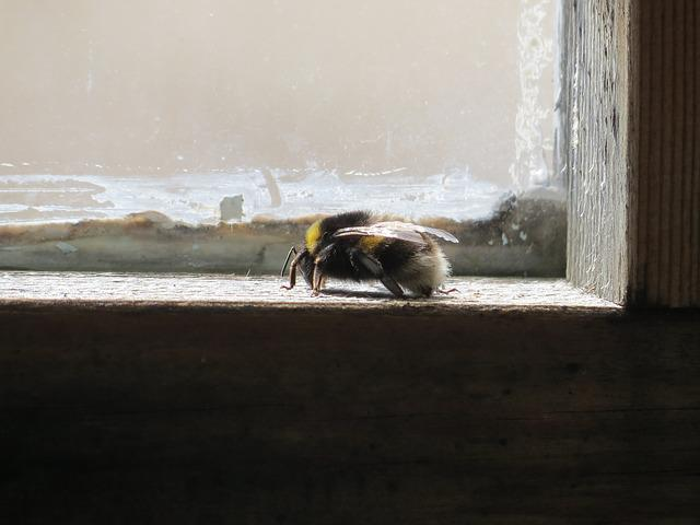 Window, Bumble-bee, Insect, Striped, Bug, Summer
