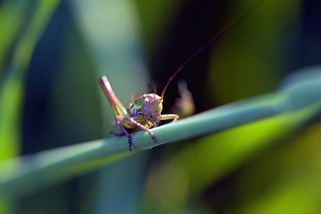 Grasshopper, Insect, Macro, Bug, Nature, Wildlife