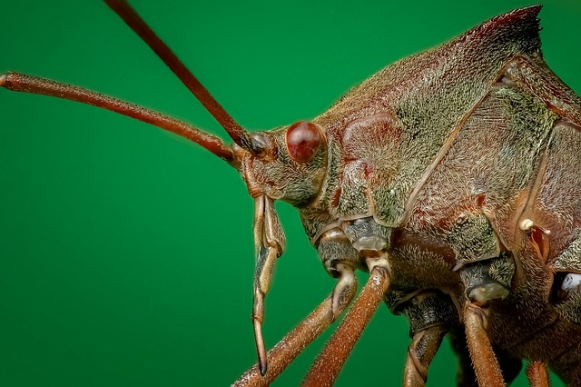 Bug, Close Up, Macro, Insect, Close, Legs, Small