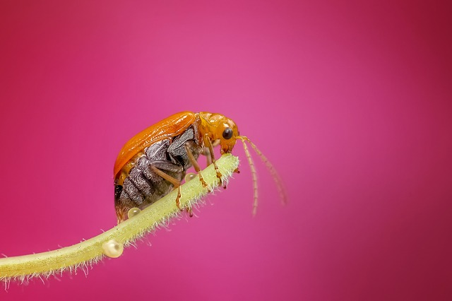 Insect, Macro, Bug, Nature, Animal, Detailed, Colors
