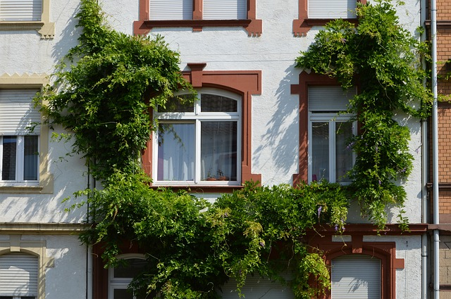 Architecture, Building, Facade, Window, Heidelberg