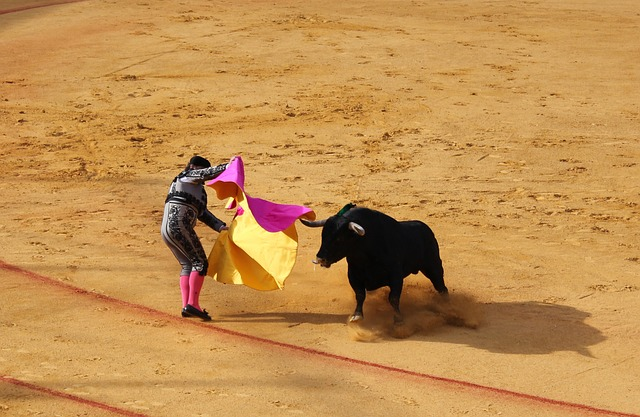 Seville, Bull Fighting, Bull