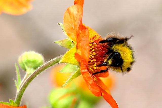 Bumble Bee, Bumblebee, Flower, Bumble, Bee, Yellow