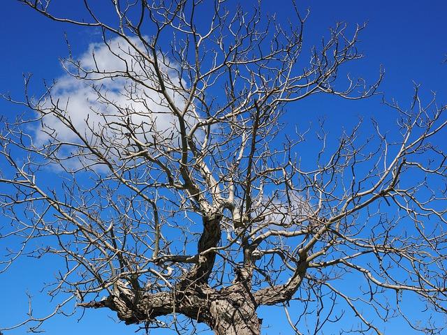Bumkrone, Kahl, Tree, Old, Dead Plant, Wood, Dead, Log