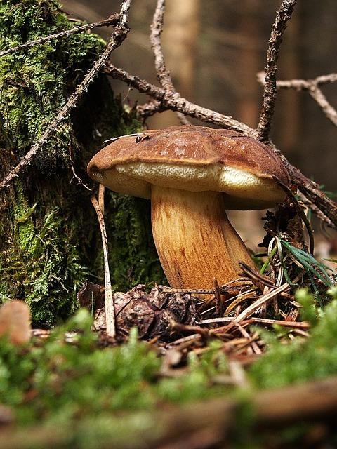 Fungus, Boletus, Bun, Edible, Mushroom Picking, Macro