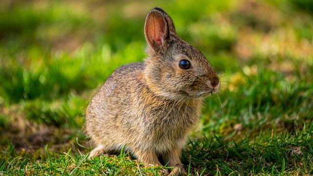 Bunny, Rabbit, Spring, Baby Bunny, Baby Rabbit, Easter