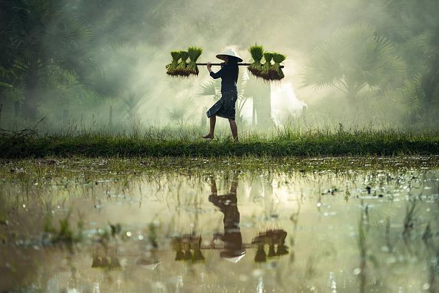 Harvesting, Myanmar, Burma, Rice Crust, Vietnamese