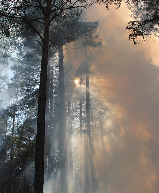Forest Fire, Fire, Burning, Conservation