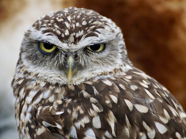 Burrowing, Owl, Little Owl, Bird, Animal, Nature