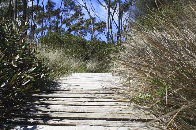 Bush, Track, Tasmania, Australia, Wood, Walk, Beach