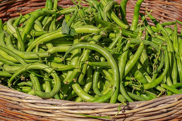 Beans, Vegetables, Basket, Harvest, Bush Beans, Green