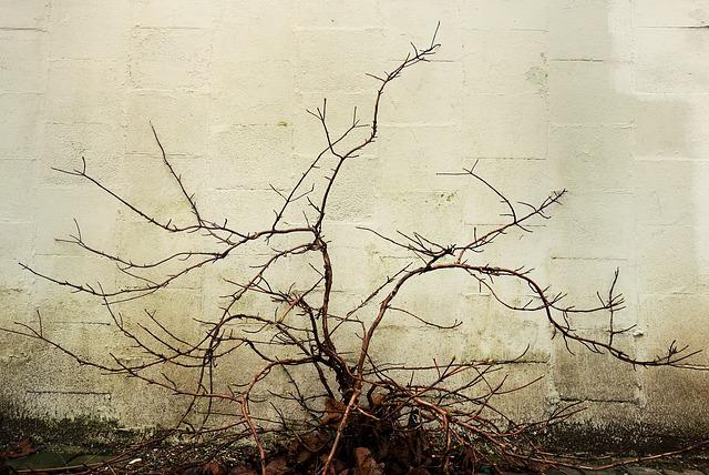Branch, Bough, Bare, Bush, Winter Bush, Jagged, Growth