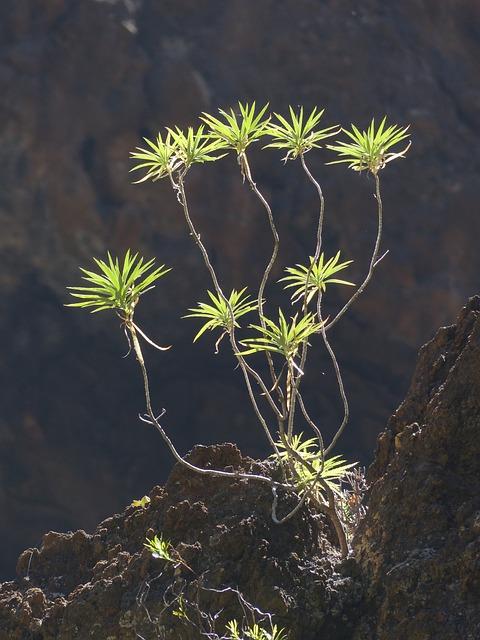 Spurge, Bush, Plant, Exotic, Euphorbia Atropurpurea