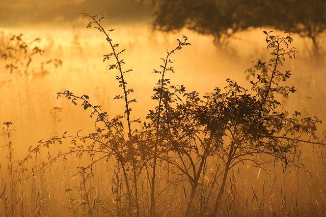 Bushes, Shrubs, Sunrise, Fog, Foggy, Foggy Morning
