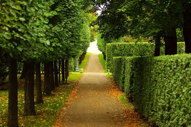 Walkway, Trimmed, Bushes, Trees, Lining, Path, Leaves