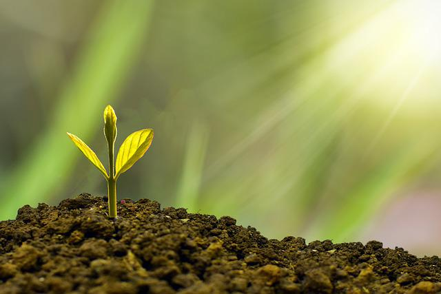 Investment, Concept, Business, Finance, Growth, Plant