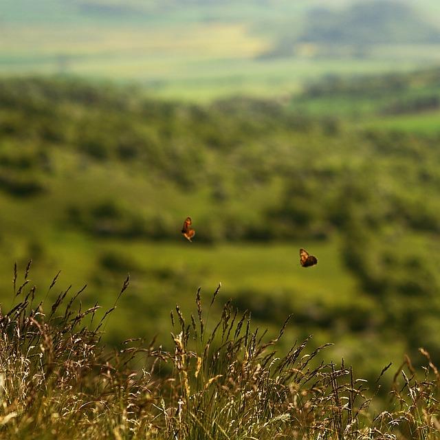 Butterflies, Landscape, View