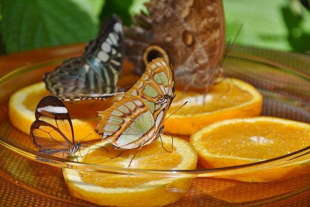 Butterflies, Feeding, Butterfly House, Orange