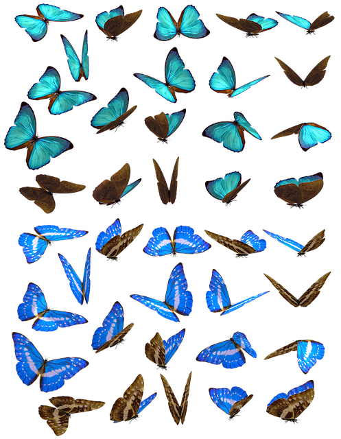 Butterfly, Butterflies, Swarm, Insect, Iridescent, Blue