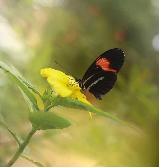 Butterfly, Butterflies, Insect, Nature, The Tropical