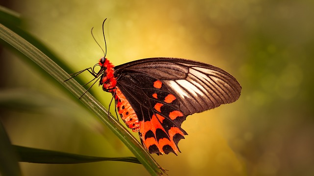 Butterflies, Bug, Nature, Wildlife, Animal Kingdom
