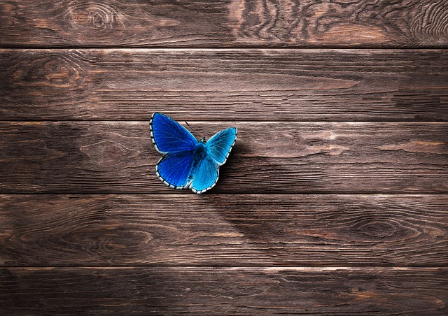 Butterfly, Wing, Insect, Animal, Blue, Wood, Boards