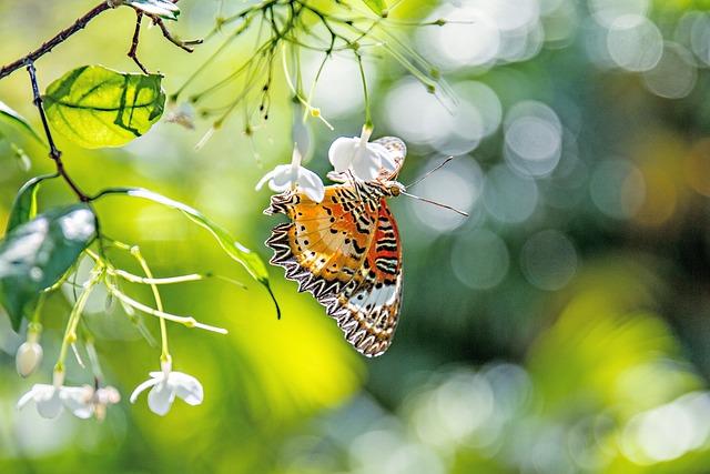 Butterfly, Bokeh, Flowers