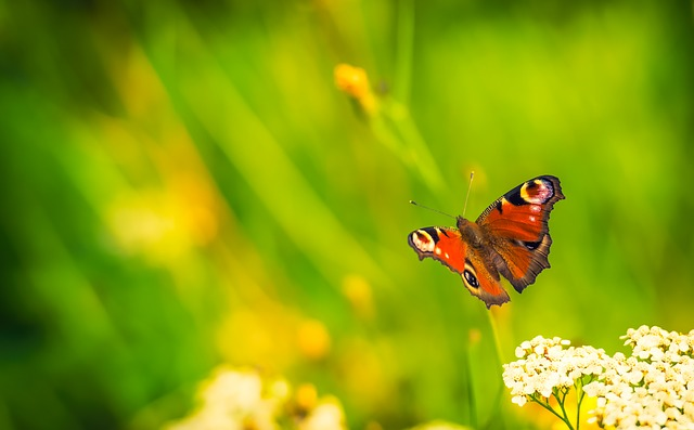 Butterfly, Nature, Bug