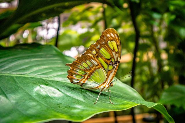 Nature, Leaf, Plant, Insect, Butterfly, Close, Colorful