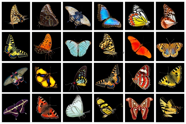 Nature, Animals, Butterflies, Butterfly, Collection