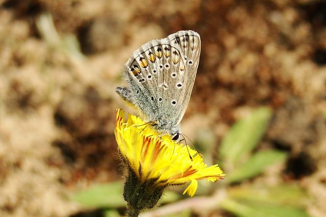 Nature, Butterfly Day, Insect, At The Court Of, Animals