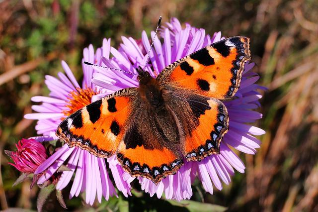 Nature, Insect, Flower, Plant, Summer, Butterfly Day