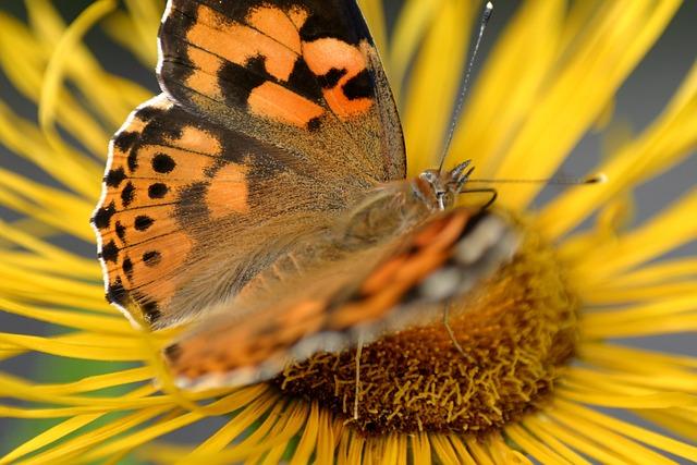 Butterfly, Flower, Jo Boonstra, Groningen