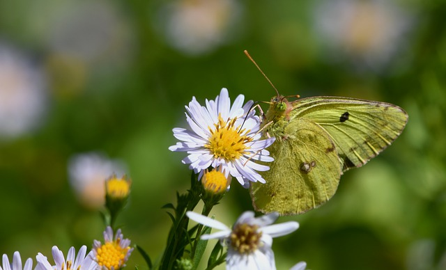 Butterfly, Insect, Bloom, Prato, Ali, Fly, Nature