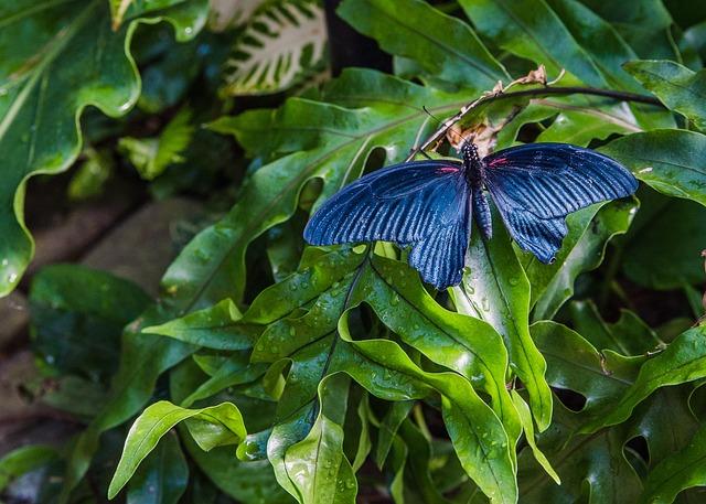 Nature, Leaf, Flora, Outdoors, Garden, Butterfly