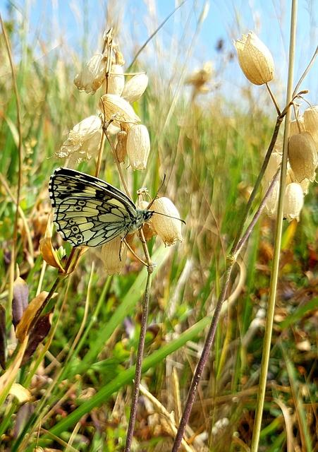 Butterfly, Butterflies, Nature, Plant, Field, Grass