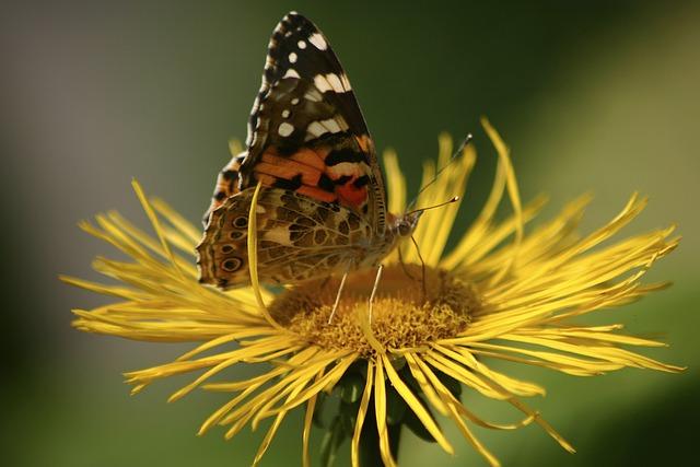 Butterfly, Jo Boonstra, Groningen