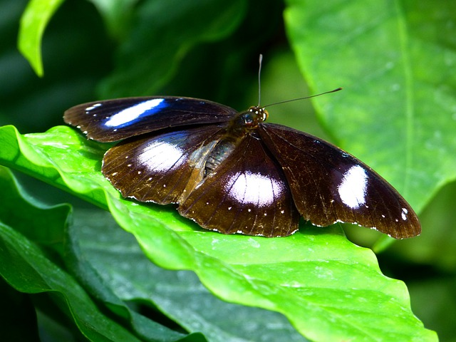Butterfly, Fly, Insect, Animal, Names Great Eggfly