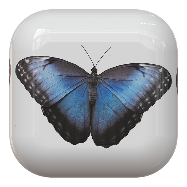 Button, Butterfly, Insect, Symbol, Theme, Design