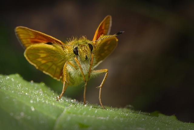 Butterfly, Moth, Insect, Macro