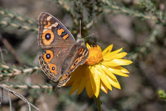 Nature, Butterfly, Insect, Wing, Outdoors, Flora